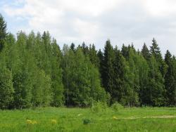 Forest Park (Форест Парк)